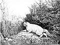 Die Gartenlaube (1876) b 683.jpg