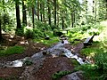 Die Vesserquelle bei Schmiedefeld - Rennsteig - Thüringer Wald - panoramio.jpg