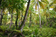 Diego Garcia Mixed Species Marsh