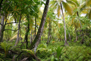 Plant ecology - A tropical plant community on Diego Garcia