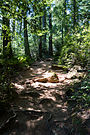 Dipsea Race - Course - Rainforest.jpg