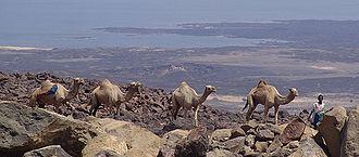 Lake Assal (Djibouti) - The Lake Assal's caravan route
