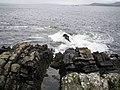 Dog's Point - geograph.org.uk - 267941.jpg
