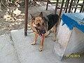 Dog100 2398.jpg