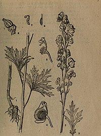 Dong bei zhi wu yao tu zhi (1959) (20807331619).jpg