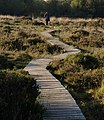 Duckboard walk, South Tawton Footpath 46 - geograph.org.uk - 996804.jpg