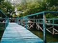 Ecowisata Mangrove Kupang, NTT.jpg