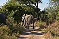 Elephant, Ruaha National Park (25) (28620172992).jpg