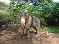 Elephant poses for photo.JPG