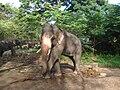 Elephant poses for photo.JPG
