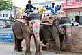 Elephants in Jaipur (4571618176).jpg