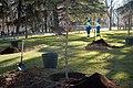 En marcha la campaña de poda que actuará en más de 15.000 árboles 02.jpg