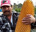 Encephalartos woodii male cone california.JPG