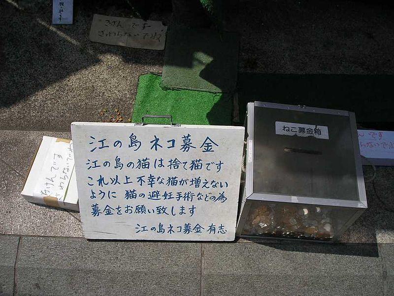 File:Enosshimatiikineko01.jpg