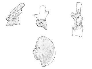 <i>Epanterias</i> genus of reptiles (fossil)