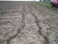 Erosion Furchen007.JPG