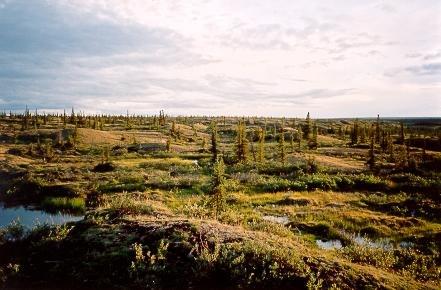 Evening shadows on tundra