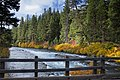 Fall color at Bridge over Metolius River, Oregon.jpg