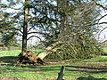 Fallen Tree - geograph.org.uk - 318968.jpg