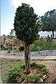 Famagusta 405DSC 0824 (31783405667).jpg