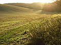 Farmland, Greys - geograph.org.uk - 1049393.jpg