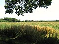 Farmland at Goring Heath near Whitchurch Hill - geograph.org.uk - 26737.jpg