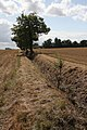 Field boundary and ditch - geograph.org.uk - 1478056.jpg