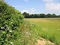 Field edge near Colfir Farm - geograph.org.uk - 872963.jpg