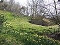 Fine spring display - geograph.org.uk - 378118.jpg
