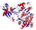 Firefly Luciferase Crystal Structure.rsh.png