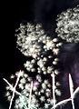 Fireworks at Darling Harbour (5481082882).jpg