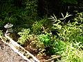 Flickr - brewbooks - John M's Garden (13).jpg