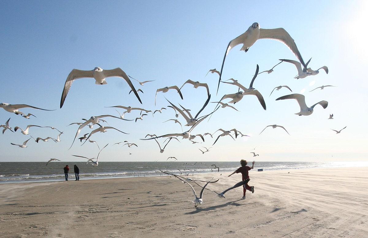 Flock of Seagulls (eschipul)