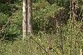 Flora from siruvani IMG 3871.jpg