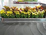Floral display at baggage collection of Bangalore Airport 02.jpg