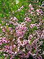 Flower-center133329.jpg