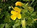 Flower021.jpg