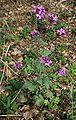 Flower 4pl.jpg