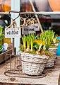 Flower bulbs in baskets (Unsplash).jpg