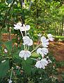 Flowers (118).jpg