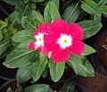 Flowers - Uncategorised Garden plants 148.JPG