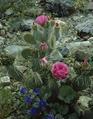 Flowers at the Desert Botanical Garden, Phoenix, Arizona LCCN2011634333.tif