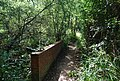 Footbridge on the High Weald Landscape Trail - geograph.org.uk - 1459798.jpg