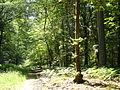Forêt de Laigue.jpg