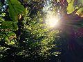 ForestFunTriberg 05.jpg