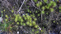 Forest & Moss 09.png
