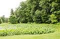 Forest Park, Springfield, MA 01108, USA - panoramio (46).jpg