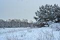 Forest near Ob river in Altai Region 12.JPG