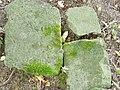 Fragmenty macewy na byłym Cmentarzu Żydowskim w Połczynie Zdroju.jpg