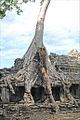 Fromager dans Preah Khan (Angkor) (6801198360).jpg